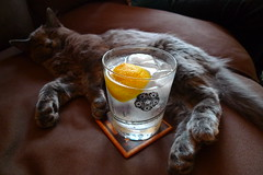 berlin, gin and tonic