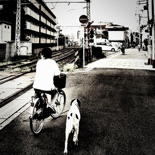 お散歩  #bwlove #iphonography #instagram