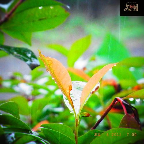 〈速報〉県内に大雨、洪水警報 :熊本地方気象台は、相良村を除く県内全域に大雨、洪水警報を発表。低い土地の浸水や河川の増水に警戒呼び掛け。   (2011/07/06 06:24:14)