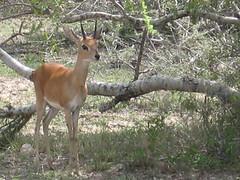 Hluhluwe/Umfolozi Game Reserve