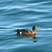 07 duck