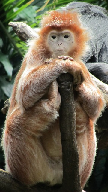 another awesome monkey.