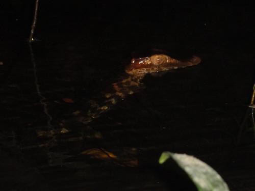 croc 5