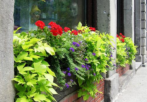 Montreal Window Box