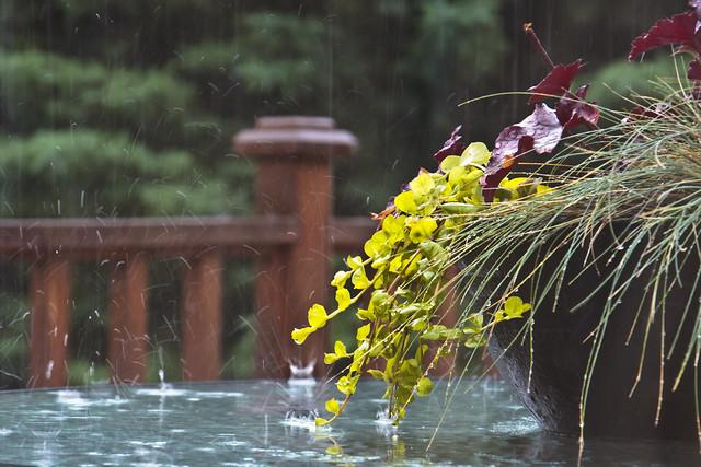 190.365 Summer Rain.