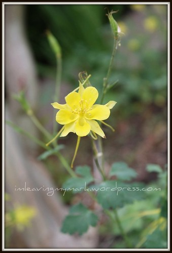 WM Spring Flowers 5