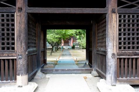 #64 Giant Nutmeg-yew of Mangan Temple