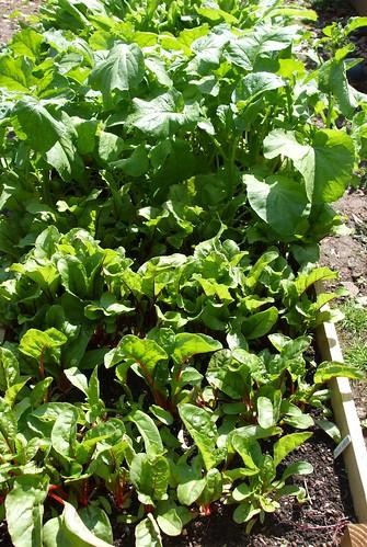 Lots of leafy veg