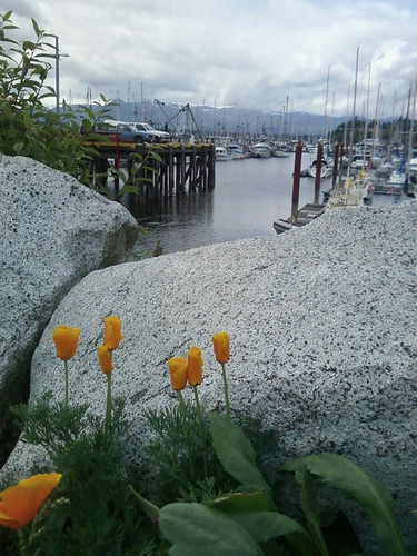Flowers at the Marina II by Karyn Ellis