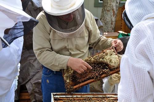 Explore the hive 26