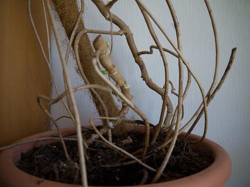 My Plants 6.jpg