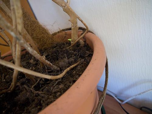 My Plants 7.jpg