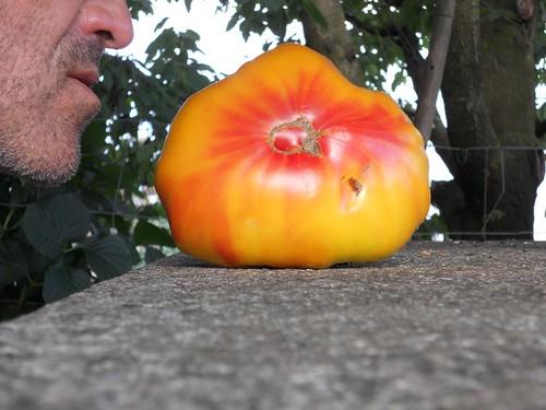 The Tomato Whisperer