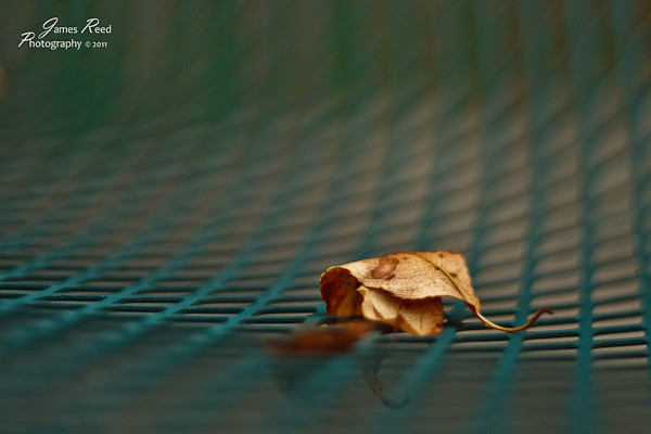 A lone leaf refuses to be swept away.