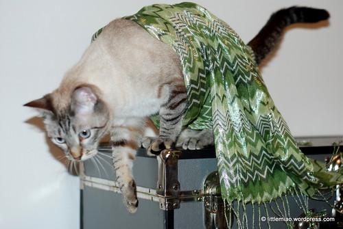 chun green scarf 10-12-2011 6-24-33 PM