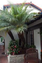 Wood arm chair, palm tree and flowers, main bu...