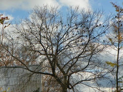 birds3
