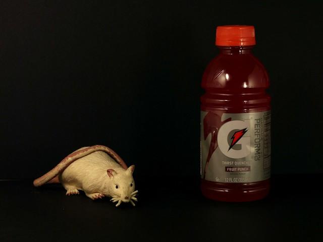 Rat and Gatorade