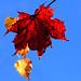 Höstliga färger / Autumn Colors