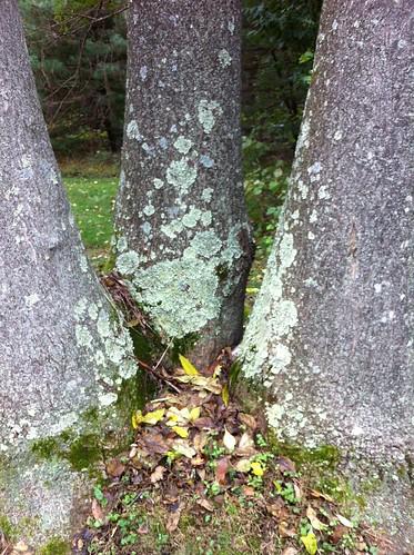 Paeonian Springs, VA Lichen 2