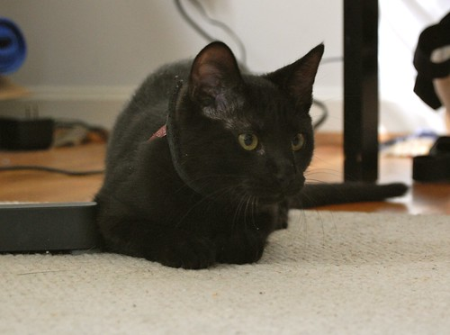 Crouching Micropanther