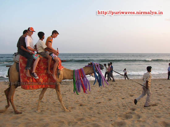 camel ride on the sea beach