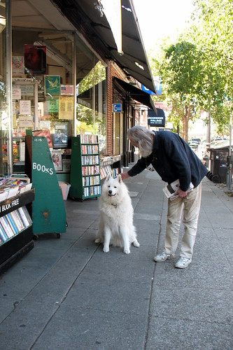 Samoyed being petted by a grey-haired man