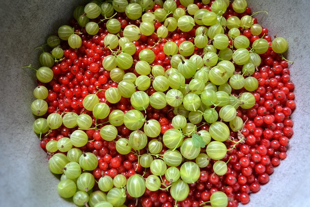 Redcurrants and gooseberries