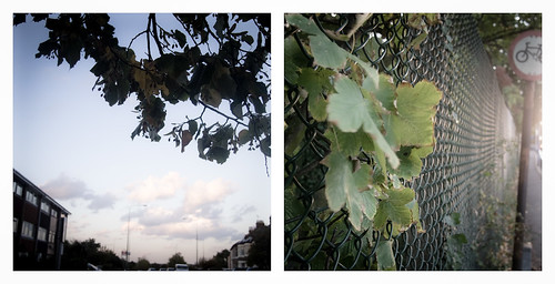 Swanley Leaves