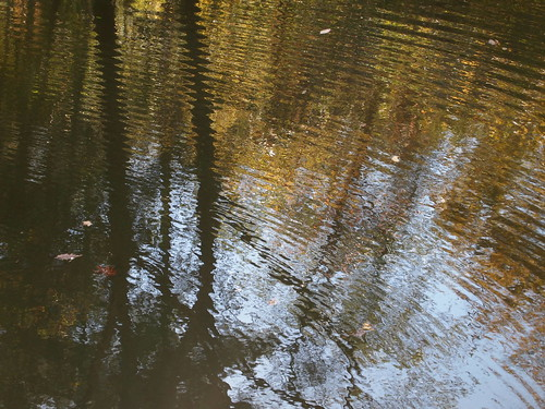Ripples in the Eno