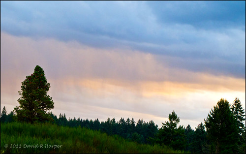 Day 307 :: 365 ..::.. Looking at the Falling Rain by Echo9er