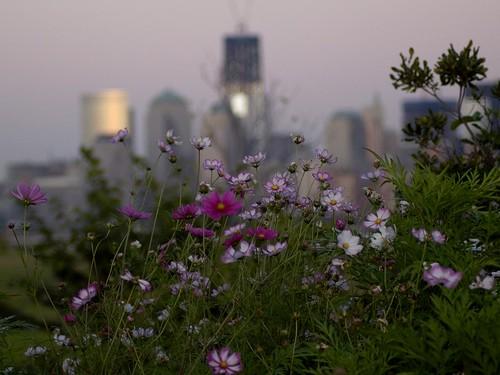 IMGP4476es - Liberty Flowers