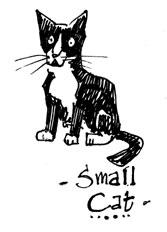 smallcat2