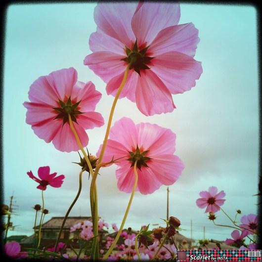 2011-11-05 at 01.30.10_edited-1