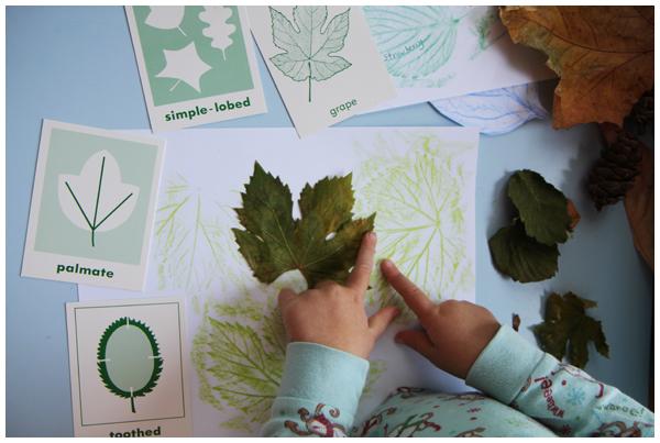 Leaf rubbings and characteristics homeschooling activity