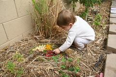 garden medicine wheel