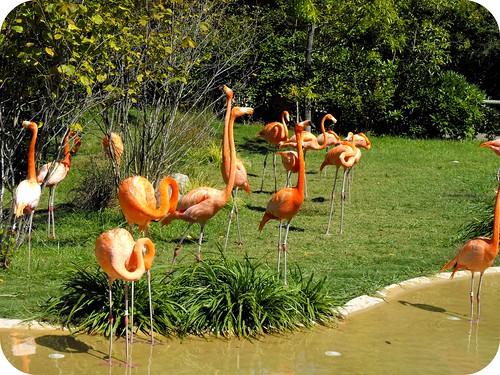 2Nashville zoo 4