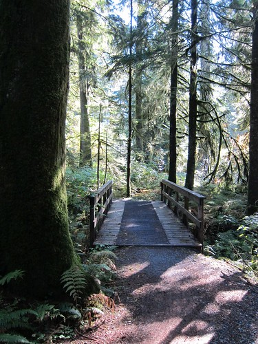 Typical wooden trail bridge