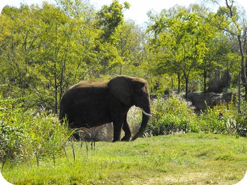 2Nashville Zoo9
