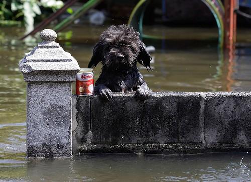 09.11.2011 - Flut in Thailand: Bilder aus Bangkok (2/3)