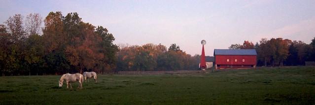 Morning Pasture 2