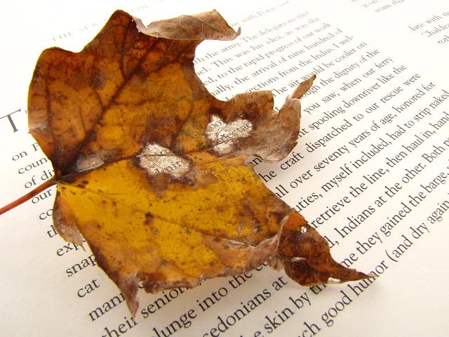 Leaf On A Page