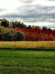 Corn & Orchard 3, Paeonian Springs, VA