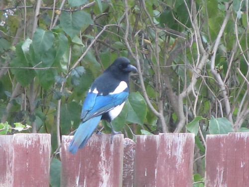 One for sorrow...