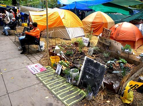 Tiny community garden, Occupy Portland camp, Portland, Oregon