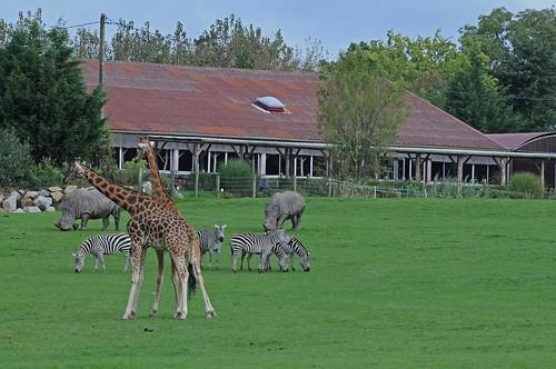 Afrikasavanne im Tierpark CERZA bei Lisieux in der Normandie