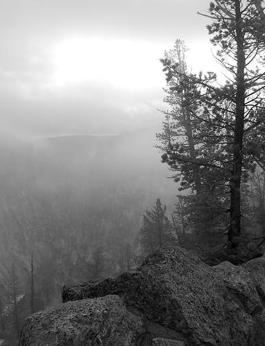 YellowstoneB&W2