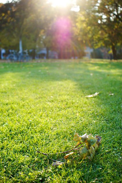 Alaunpark im Herbst