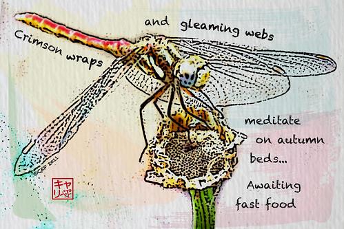 Etegami - Dragonfly