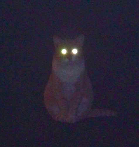 Kitty Lantern by WETCLOUD